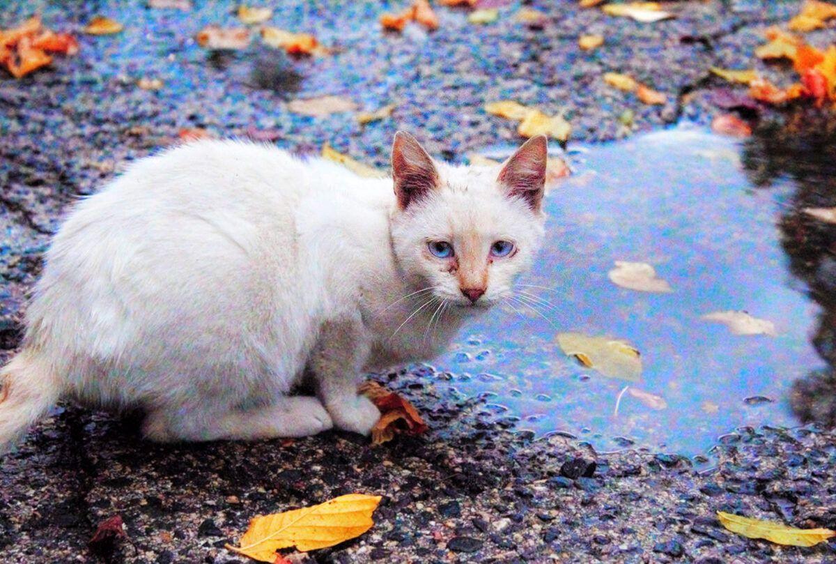 gato junto a un charco