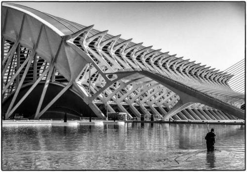Blanco-y-negro-2020_D.WARREN-Museo de Ciencias,Valencia.JPG