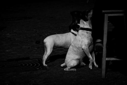 Blanco-y-negro-2020_Gonzalo Pacheco-fieles bodegueros