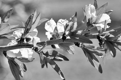 Blanco-y-negro-2020_Jotaeme_1