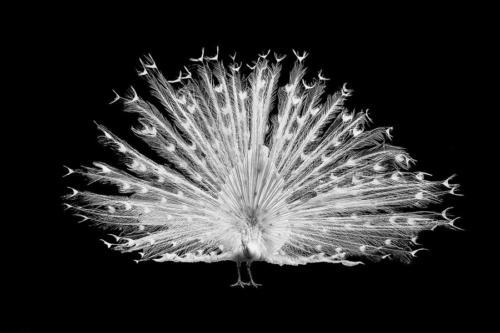 Blanco-y-negro-2020_sebastian40