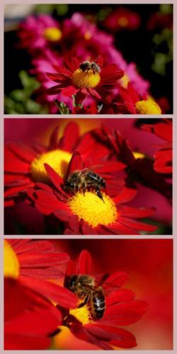Carlos Franco - De flor en flor