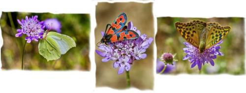 JM - Serie mariposas