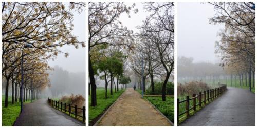 Serie de tres 2020_Jotaeme - Serie árboles en la niebla